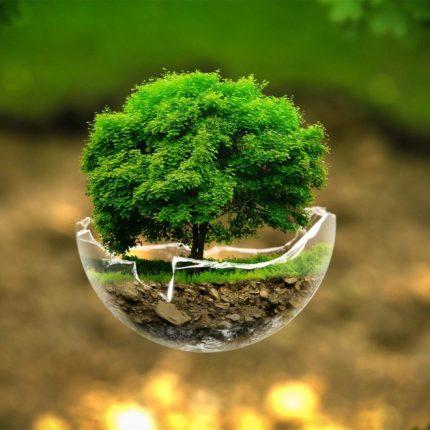 Forumul Moldo-Ceh dedicat dezvoltării sectorului energiei din biomasă va avea loc la Chişinău