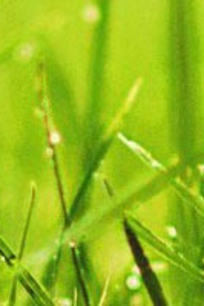 Grass-in-rain